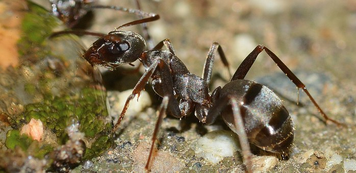 insects-566408__340